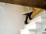 Vanessa High Heels Boots Furs Stockings Big Black Toy