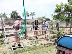 Slutty Cowgirls Riding Cock On The Farm